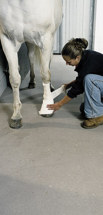Horse Standing On Flooring Designed To Last.
