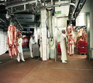 Overhead rolling racks help several workers move product across floor into large freezer area.