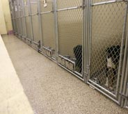 Dogs look eargerly at patrons atop tan kennel protecting floor covering.