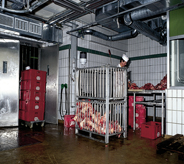 Meat processing plant stays clean with seamless flooring.