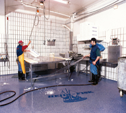 Fish processing workers diligently clean mold resisting floor system with pressured water.